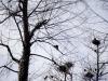 Poruszenie na drzewie