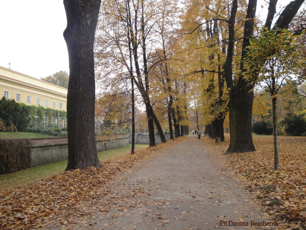Spacer w towarzystwie liści